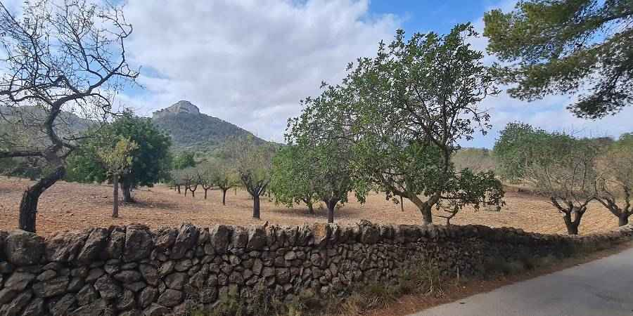 Fantastic plot of 29000m2 with building permit for a house of 450m2 with water well and pool